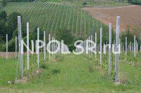 Виноградные столбики